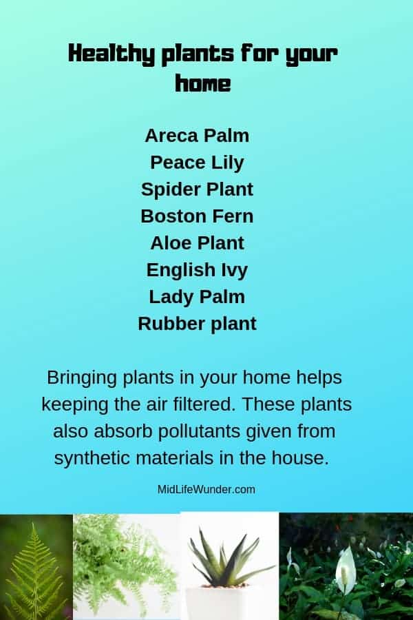 Healthy plants for your home