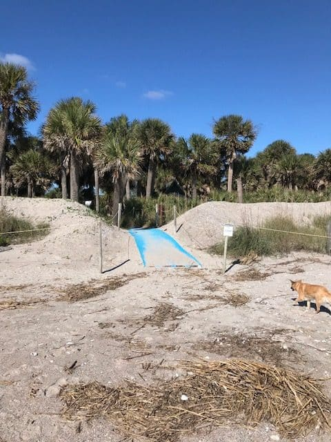campground is right behind the dunes