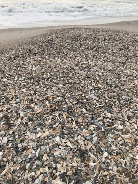 Collect shells and shark teeth or make beach art out of your beach finds at Edisto Beach.