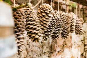 fir cone decoration