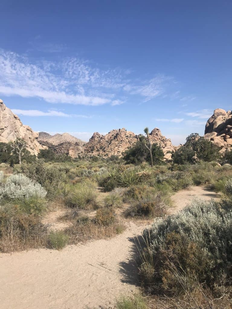 Joshua Tree National Park is one of my favorites. 10 unforgettable RV Trips in the USA (for your Bucket List)