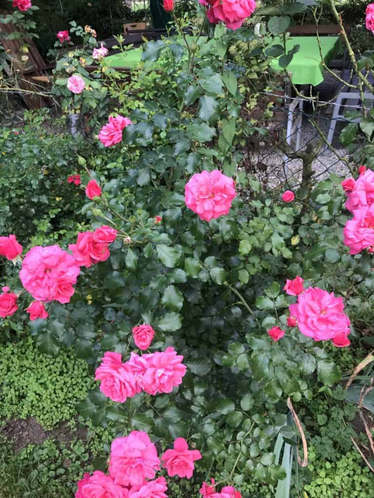 Plant flowers in your backyard 5 best things you should do now